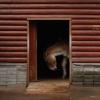 лошадь.jpg