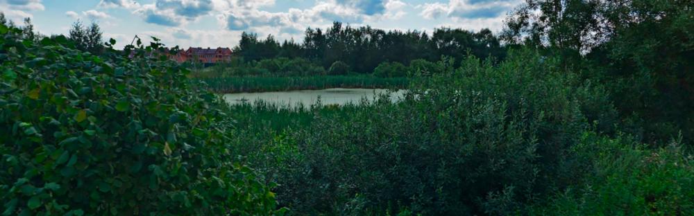 priroda-v-kp-petrovskie-allei-09.png
